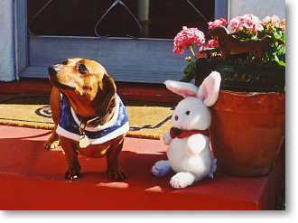 Dachshund Betty with Fuzzy Rabbit Friend, now minus ears & tail - Mr. Snowman.