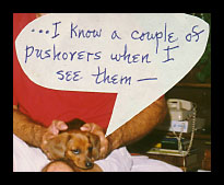 Dachshund  - I know a couple of pushovers when I see them.